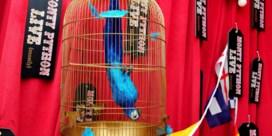 Dode paars-gele papegaaien