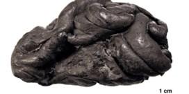 Kauwgom uit het Stenen Tijdperk onthult DNA