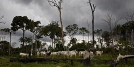 'BMW's in ruil voor soja vloekt met Green Deal'