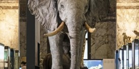 Africamuseum zet gids op non-actief