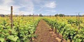 2019 was weer een topjaar voor Belgische wijn
