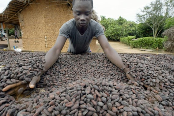 Cacaokartel dreigt uw chocolade duurder te maken
