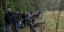 Bruine lijster voor het eerst in 65 jaar in Kempen gespot