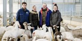 'We wisten absoluut niets van geiten'