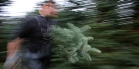 De redding voor de Brusselse kerstboom is nabij