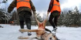 'Wellicht jagen we ooit op wolven in België'