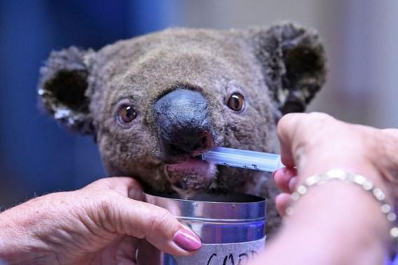 Actie WWF voor Australië groot succes: 'De situatie is nog steeds catastrofaal'