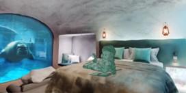 Pairi Daiza opent hotel onder water bij walrussen en ijsberen