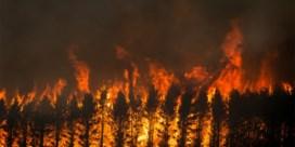 New South Wales opent onderzoek naar verwoestende bosbranden