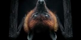 Waarom wij bang zijn van vleermuizen