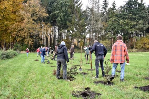 Vlaanderen maakt 3,3 miljoen euro vrij om 'boompjes op te zetten'