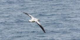 De albatros als vliegende spion