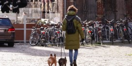 Politie controleert voortaan of je hond is gechipt