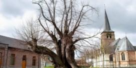 We zijn minder tolerant voor bomen dan we denken