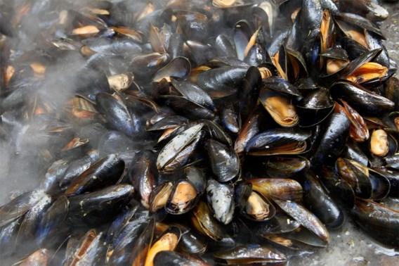 Massa mosselen levend gekookt door hittegolf in Nieuw-Zeeland
