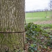 Gezocht: de boommoordenaar van Schorisse