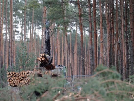 Tesla mag toch bos kappen voor fabriek nabij Berlijn