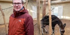 Curator zoogdieren Antwerpse Zoo en Planckendael verhuist naar Berlijn