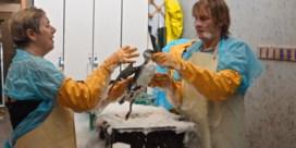 Vogelopvangcentrum overspoeld door vogels na illegale olielozing