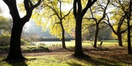 Is het bomenplan van Somers haalbaar?