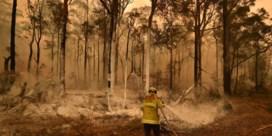 Australisch inferno draagt duidelijke klimaatstempel
