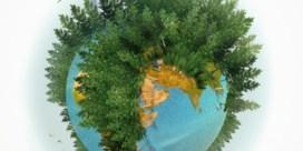 De hele wereld plant bomen, maar het bos gaat achteruit