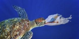 Zeeschildpadden misleid door geur plastic afval