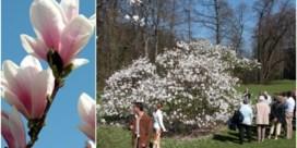 Lente is al begonnen in' Plantentuin Meise
