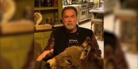 Arnold Schwarzenegger verspreidt coronaboodschap met paardje en ezel aan zijn zij