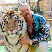 De kracht van tijgerwelpjes