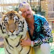 De kracht van tijgerwelpen en luipaardprints