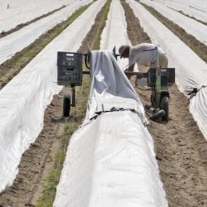 Corona-kronieken: 'Wie gaat straks die 3 miljoen kilo asperges kopen?'