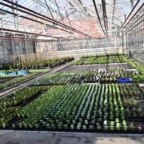Commissie Landbouw pleit voor heropening tuincentra: 'Plantjes kan je niet invriezen'
