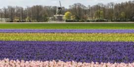 Bekend bloemenpark Keukenhof gaat virtueel open