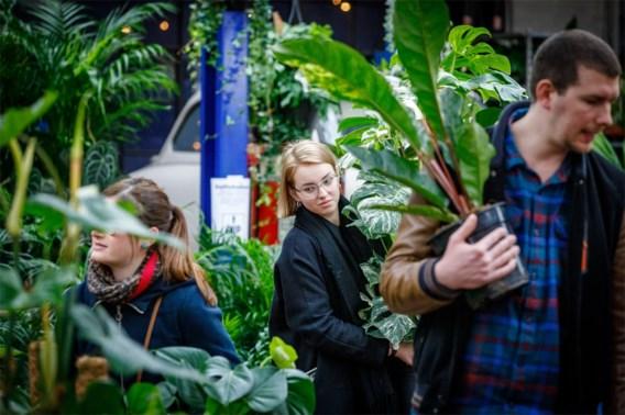 Doe het nu (nog snel): kamerplanten verpotten