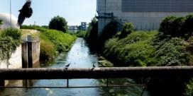 Virus in afvalwater: geen ziekmaker, wel goede indicator