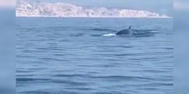 Unieke beelden: Spelende walvissen gespot voor de Franse zuidkust