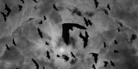 'De volgende pandemie kan morgen al uitbreken'
