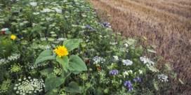 Blijf in uw hof en help mee aan 'grootste bloemenweide van de Benelux'