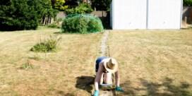 Maak van de Vlaamse klei een spons tegen de droogte