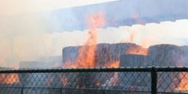 Geen abnormale waarden gemeten bij papierbrand Dendermonde