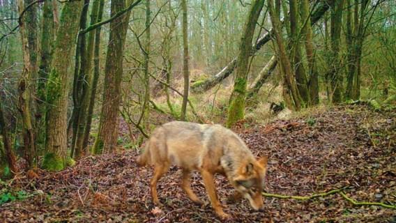 Jagers zijn razend op man achter Welkom Wolf