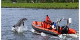 Dolfijn vanuit Amsterdamse haven opnieuw naar Noordzee gebracht