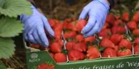 1.041 kandidaten willen helpen oogst plukken