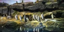 Grote dierenparken openen eerst voor abonnees