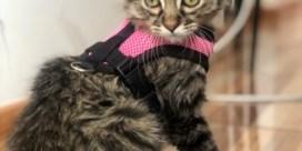 Advocaat: 'FAVV vraagt 5.000 euro per uur dat katje Lee niet wordt overgedragen'