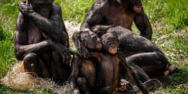 Zoo en Planckendael eerste twee weken alleen open voor abonnees