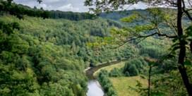 Plantkundige eenheidsworst rukt op in onze bossen