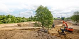 'We geven de boom nu duizenden liters water'