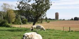 Sint-Pieters-Leeuw voert tot eind 2025 bouwstop in